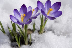 A Michigander Guide For Preparing Your Home For Spring